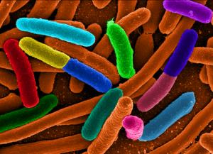 Microbiote : une métropole dans nos entrailles